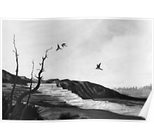 tree swallows in yellowstone Poster