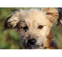 I am cute and I know it :) :) :)  Photographic Print