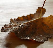 Goodbye Summer - Hello Fall! II by vbk70
