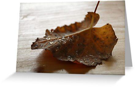 Goodbye Summer - Hello Fall! II by vbk70