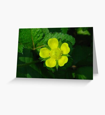 Indian Strawberry Blossom Greeting Card