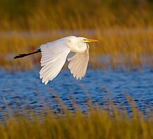 Great Egret by Christian Hunold