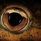 Reptiles and amphibians by jimmy hoffman