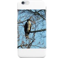 Hawk Perched in Tree iPhone Case/Skin