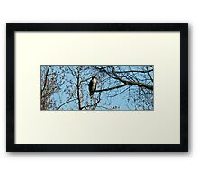 Hawk Perched in Tree Framed Print