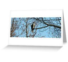 Hawk Perched in Tree Greeting Card