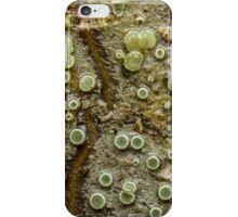 Lichen on Cascara Bark iPhone Case/Skin