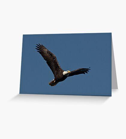 In Flight, Bald Eagle, Jordan Lake, NC Greeting Card