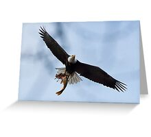 Meal Delivery,  Bald Eagle, Jordan Lake, NC Greeting Card
