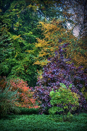 Autumn's Palette by Colin Metcalf