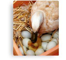 A Mothers Kiss  ~ Newborn Duckling ~ Canvas Print