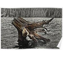 Grassy Lake Stump Poster