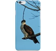 Hawk Perched 3 iPhone Case/Skin