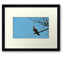 Hawk Perched 3 Framed Print