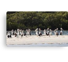 Pelicans on the Tweed Canvas Print
