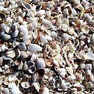 Captiva Island Shells by Patricia127