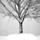 One snowy Tree on a very misty Day.......... by Imi Koetz
