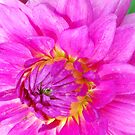 Flourescent Pink! by Geraldine Miller