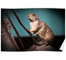 Gopher On Blue Poster