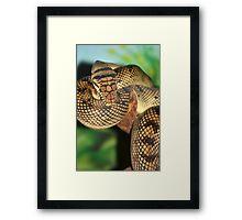 Amethyst Python Framed Print