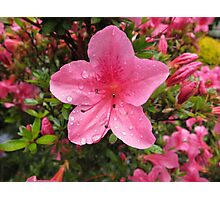 Pink Flower with Water Droplets Photographic Print
