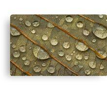 Water on Leaf Canvas Print