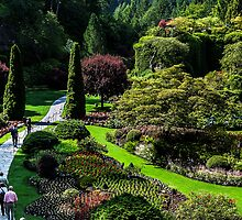 Butchart Gardens by elky