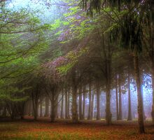 The Copse III - Mt Wilson NSW Australia by Brad Woodman