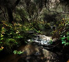 Fairy Dell by Sue-ann Tilby Photography