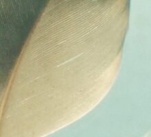 Grey Feather Sticker