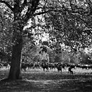 Deer - Windsor Great Park by MaggieGrace