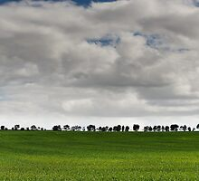 Tree Lined Paddock by Sue-ann Tilby Photography