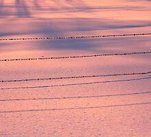 Fence Wire Pink Blue Snow by Jamie Roach