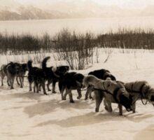 Old School Mushing: Transporting U.S. Mail in Alaska, around 1910 Sticker