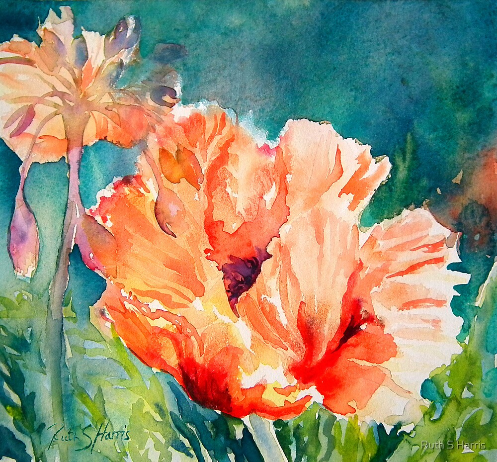Poppies and Allium by Ruth S Harris