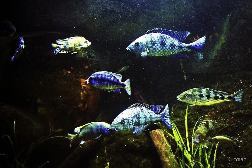 Fish Tank by tmac