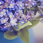 Forget me not blue by LittleBlueWren