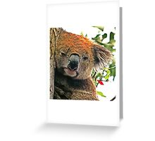 Otways Koala Greeting Card