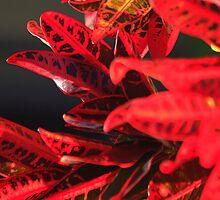 Red Flower by James mcinnes