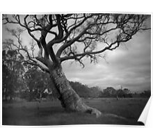 Scary Tree- Harrogate Road Poster