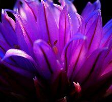 Purple Flower by tmac