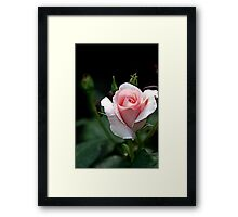 """"""" French Lace..."""" Framed Print"""