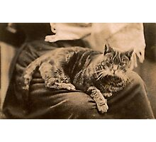 Retro Cat Photographic Print