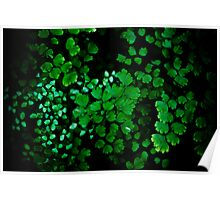 Green Patterns Poster