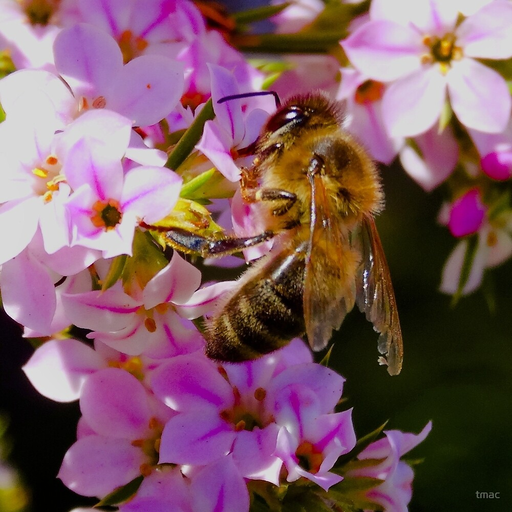 Pollination On Pink by tmac