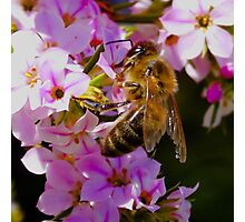 Pollination On Pink Photographic Print