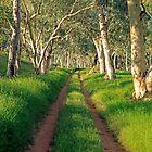 The Lane by James mcinnes