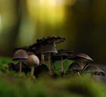 Mushrooms  by Martina Kausch