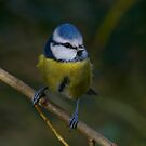 Blue Tit by Dave Godden