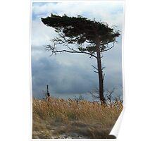 Wind Dodger Poster